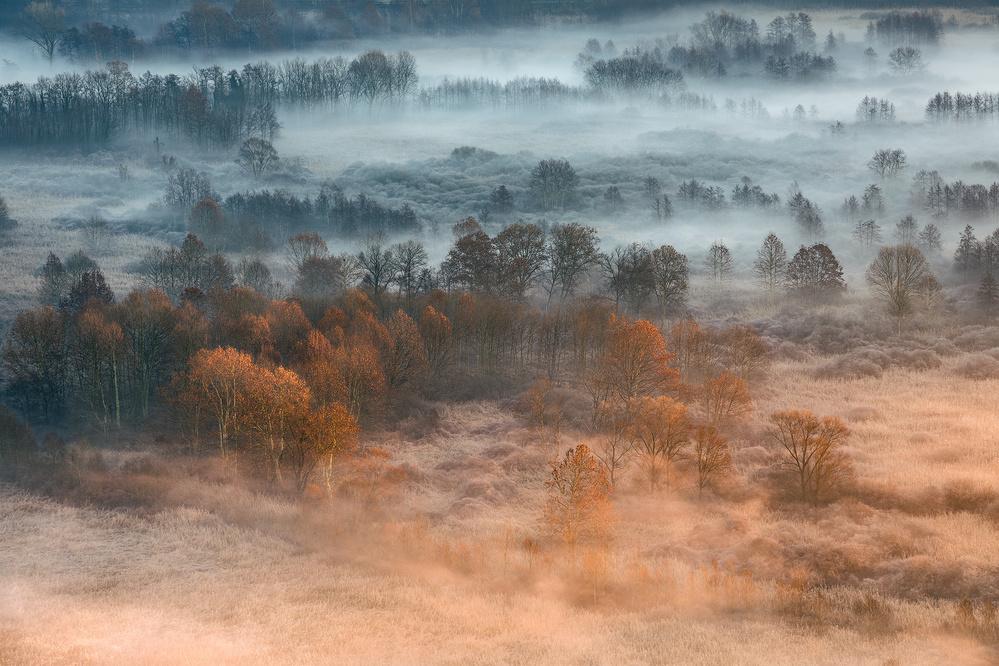 Autumnal misty dawn