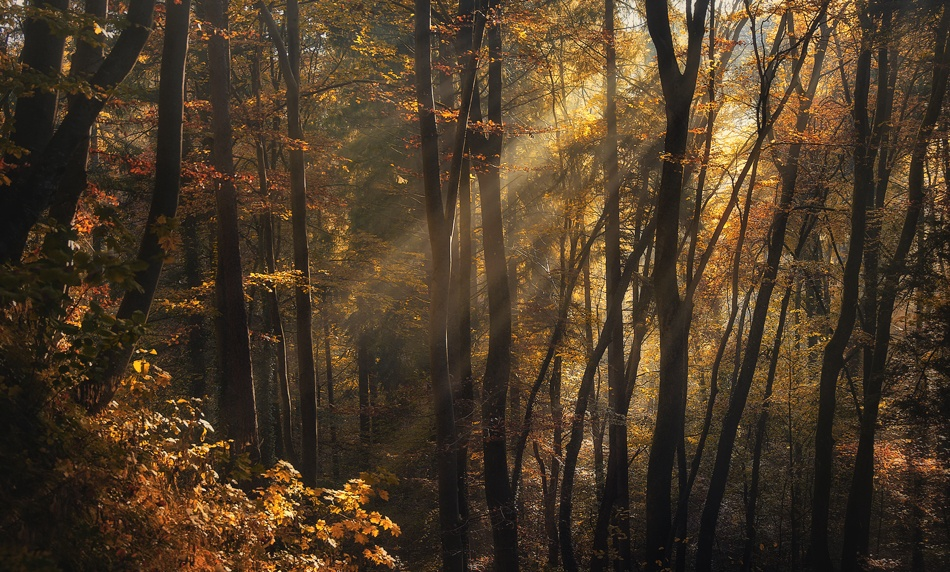 A piece of fine art art photography titled Autumn Light by Norbert Maier