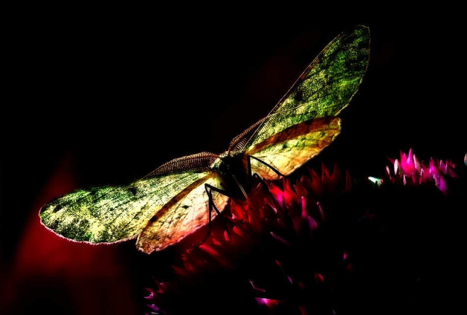 A piece of fine art art photography titled The Moth by Leon Baas