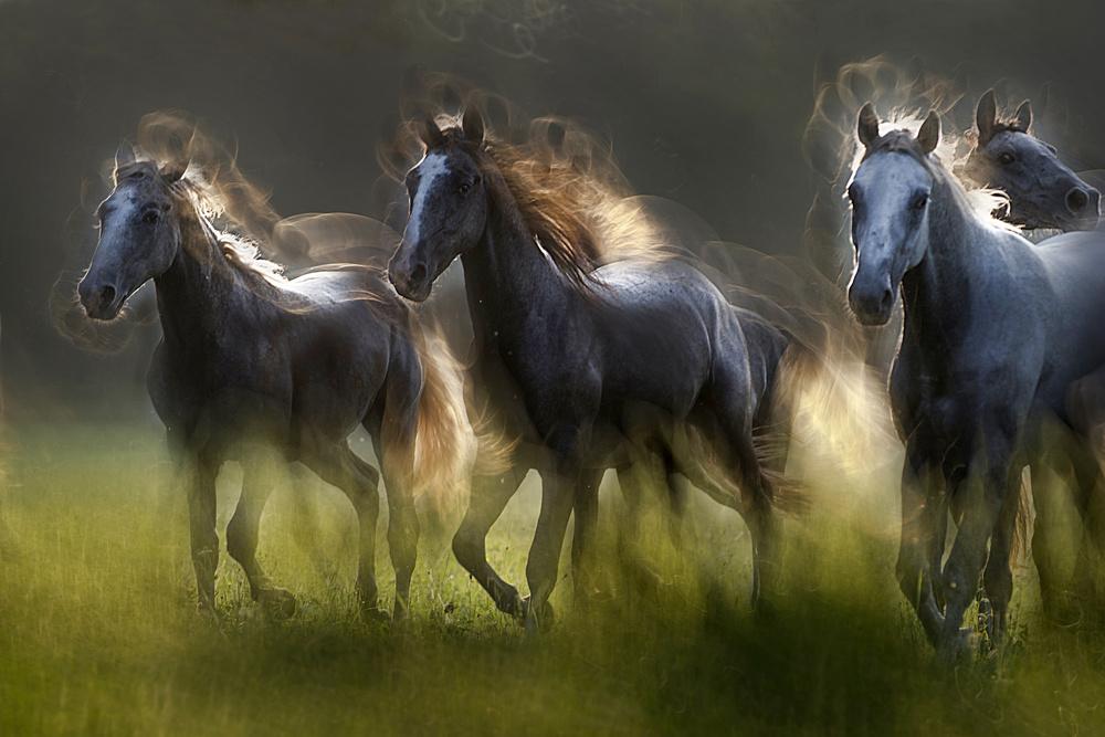 A piece of fine art art photography titled Aura by milan malovrh