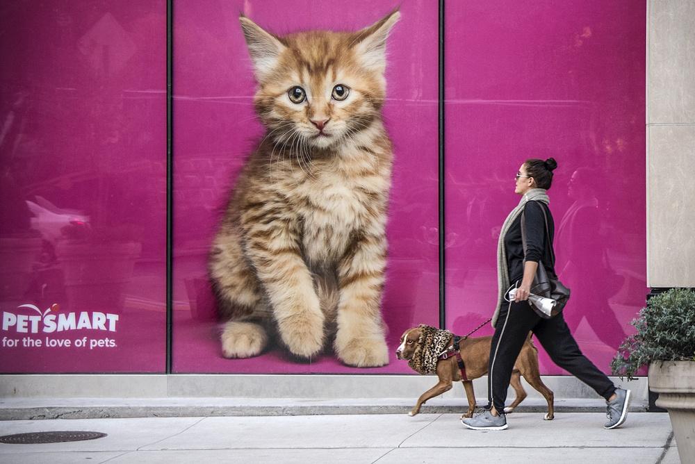 A piece of fine art art photography titled Feline Canine by Linda Wride