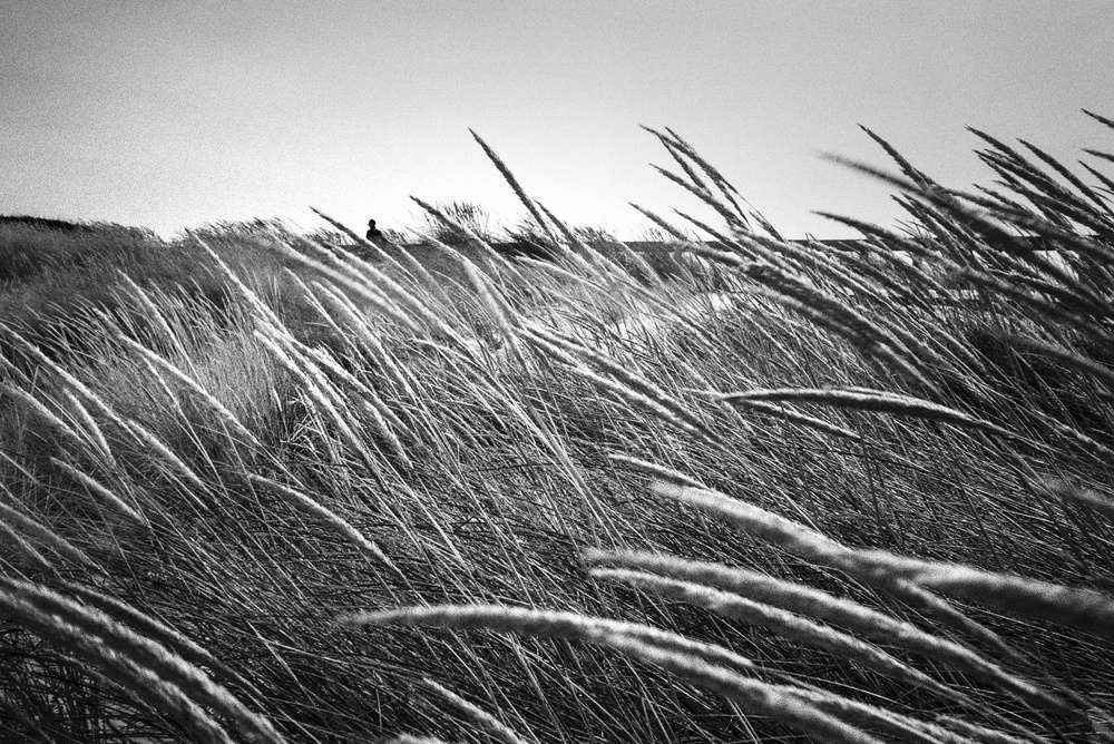 A piece of fine art art photography titled The Yellow Winds by Paulo Abrantes