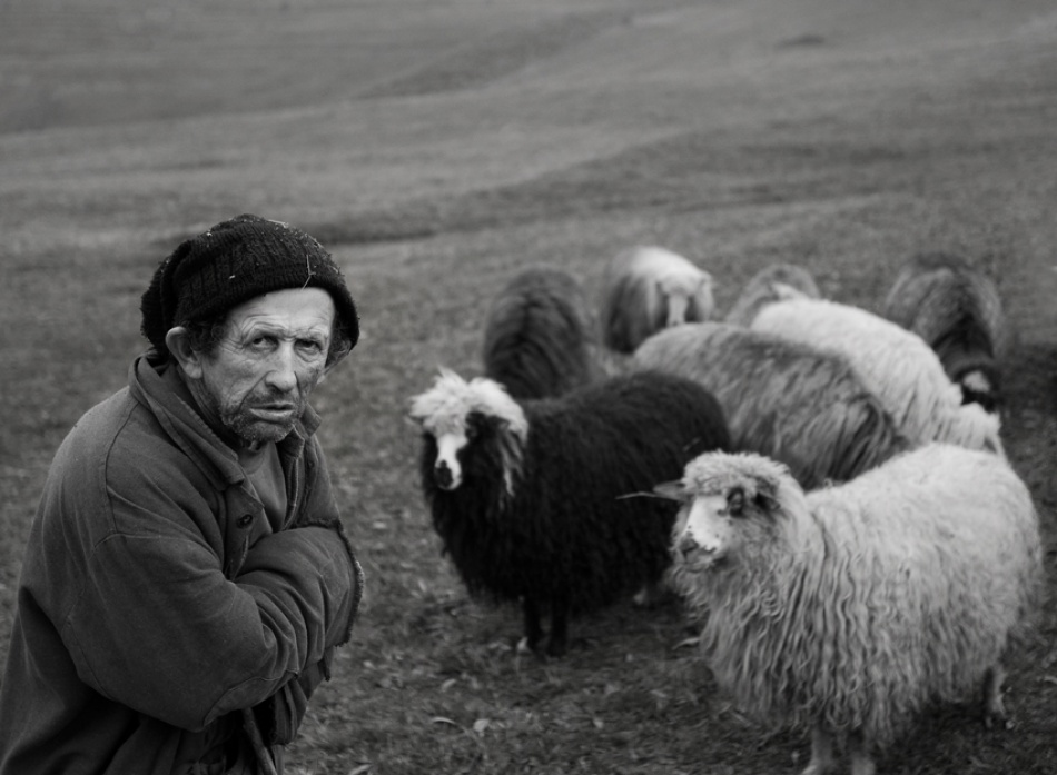 A piece of fine art art photography titled Shepherd With His Sheep by Mihnea Turcu