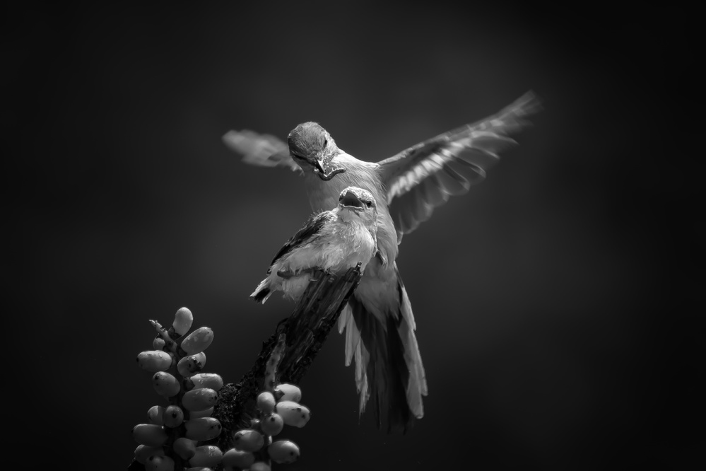 A piece of fine art art photography titled The Guardian by Gunarto Song