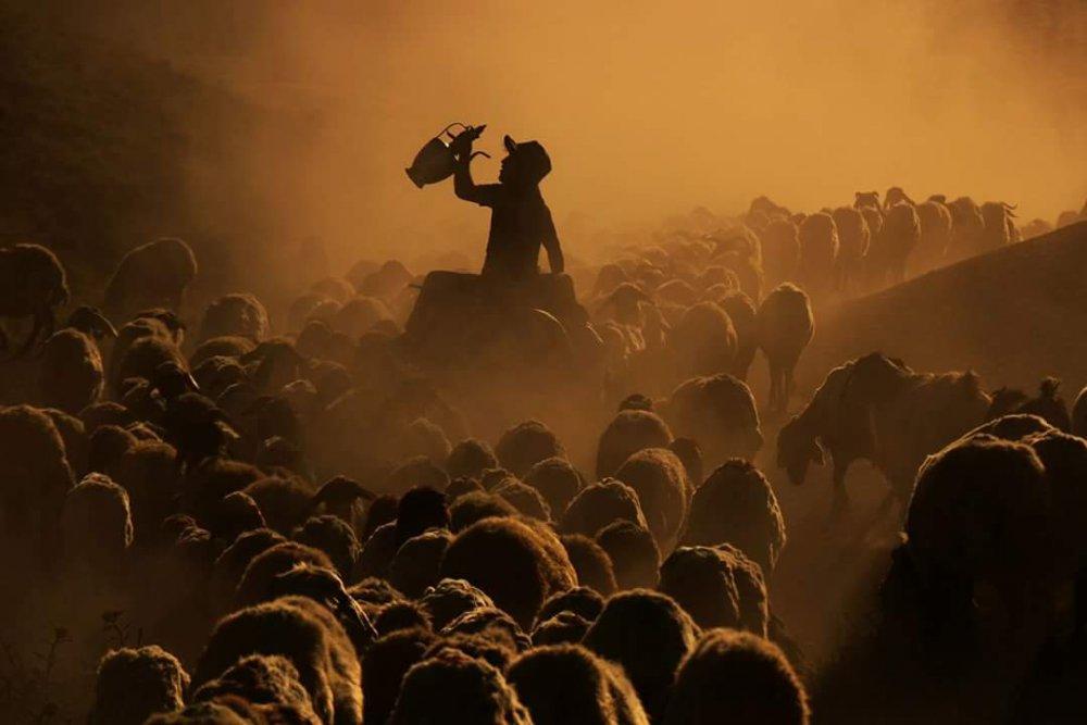 A piece of fine art art photography titled Sürü by Funda Orhan