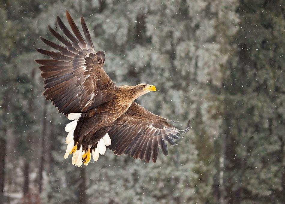 A piece of fine art art photography titled Sea Eagle by Robert Adamec