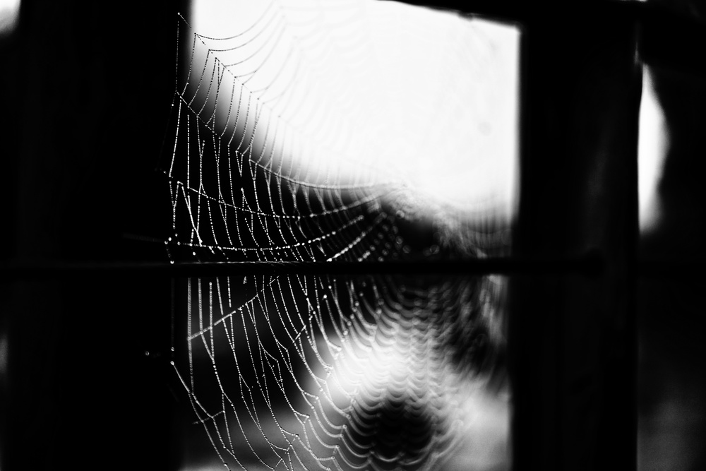 A piece of fine art art photography titled Spider Web by Blaz Fortuna