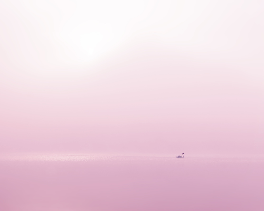 View this piece of fine art photography titled Swan II by Alexandre Gibo