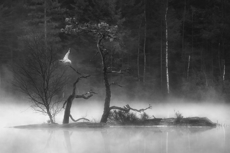 A piece of fine art art photography titled I Call to a Seagull B/w by Daniel Hasselberg