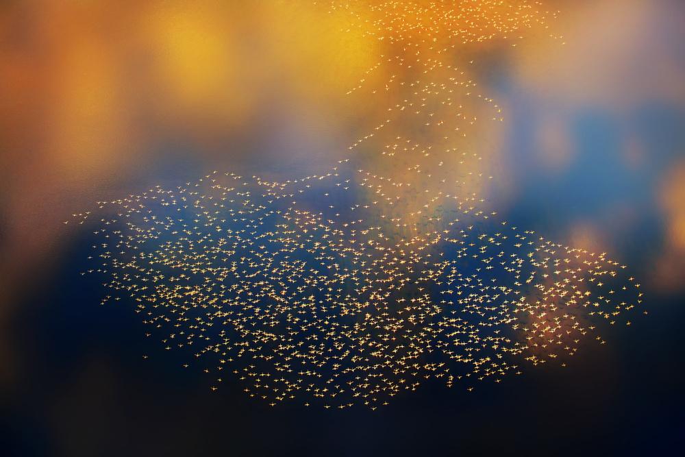 A piece of fine art art photography titled Sunset Flight by Phillip Chang