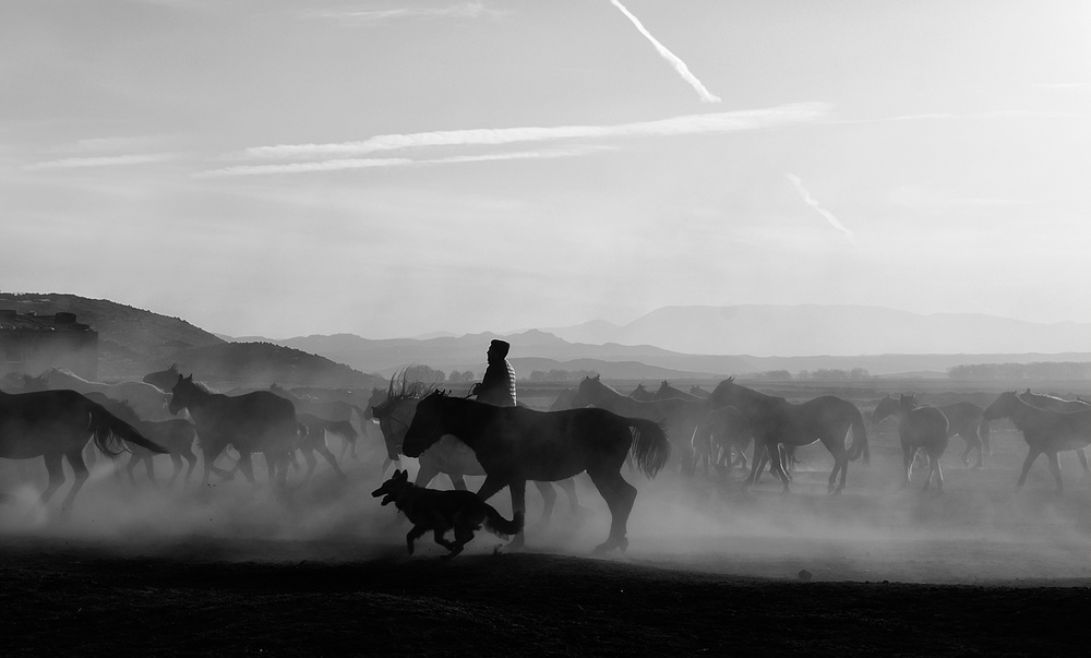 A piece of fine art art photography titled Horses by enginbasa