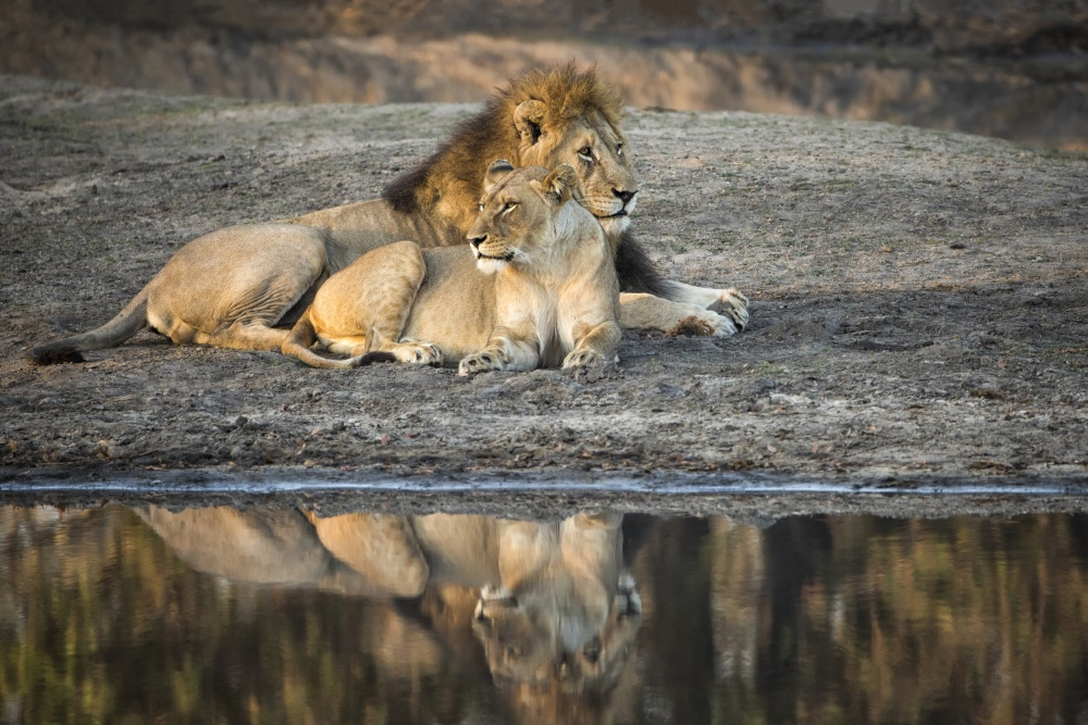 A piece of fine art art photography titled Lion Island by Renee Doyle