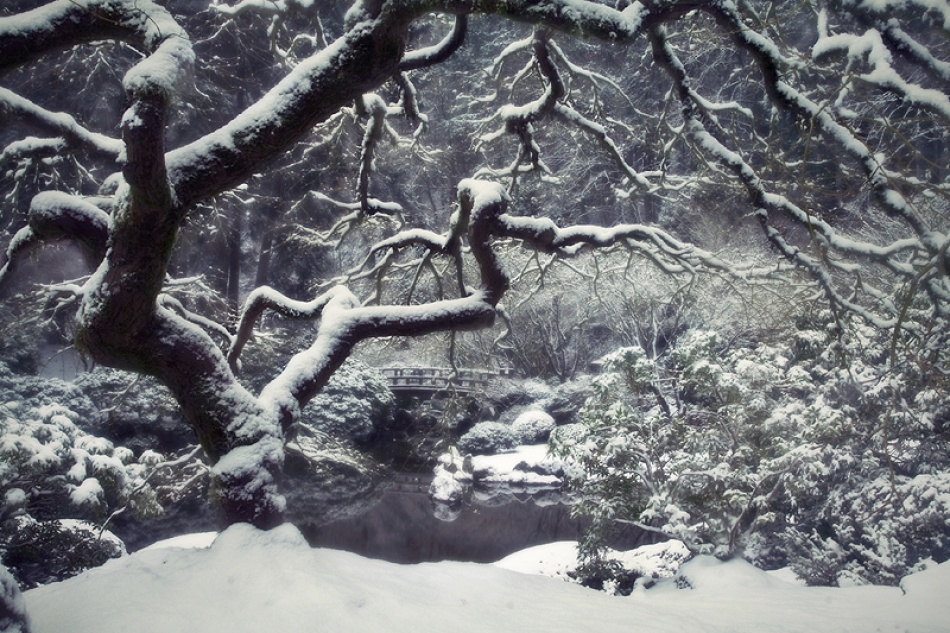 A piece of fine art art photography titled Snowfall In Eden by Matthew Tauzer