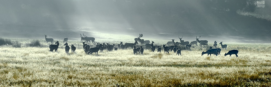 A piece of fine art art photography titled MIst, Frost, Early Morning by Vic Chapman