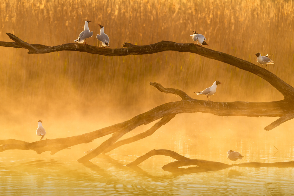 A piece of fine art art photography titled Gull Chat by Sandy Spaenhoven