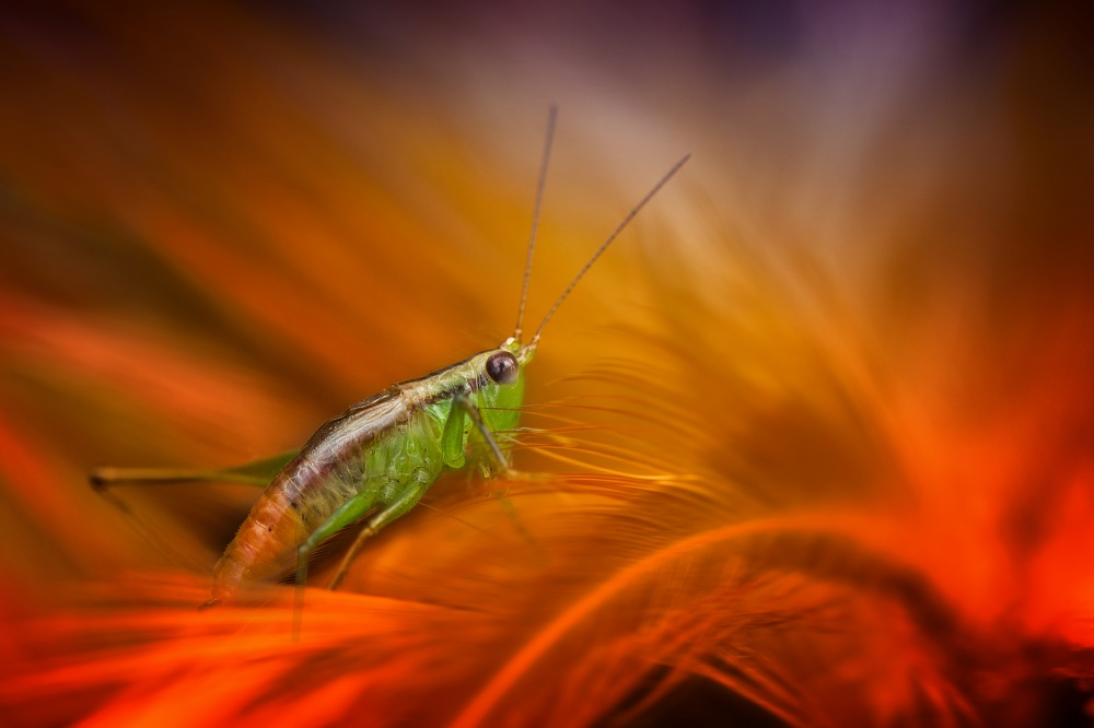 A piece of fine art art photography titled Hopper On Orange by Fauzan Maududdin