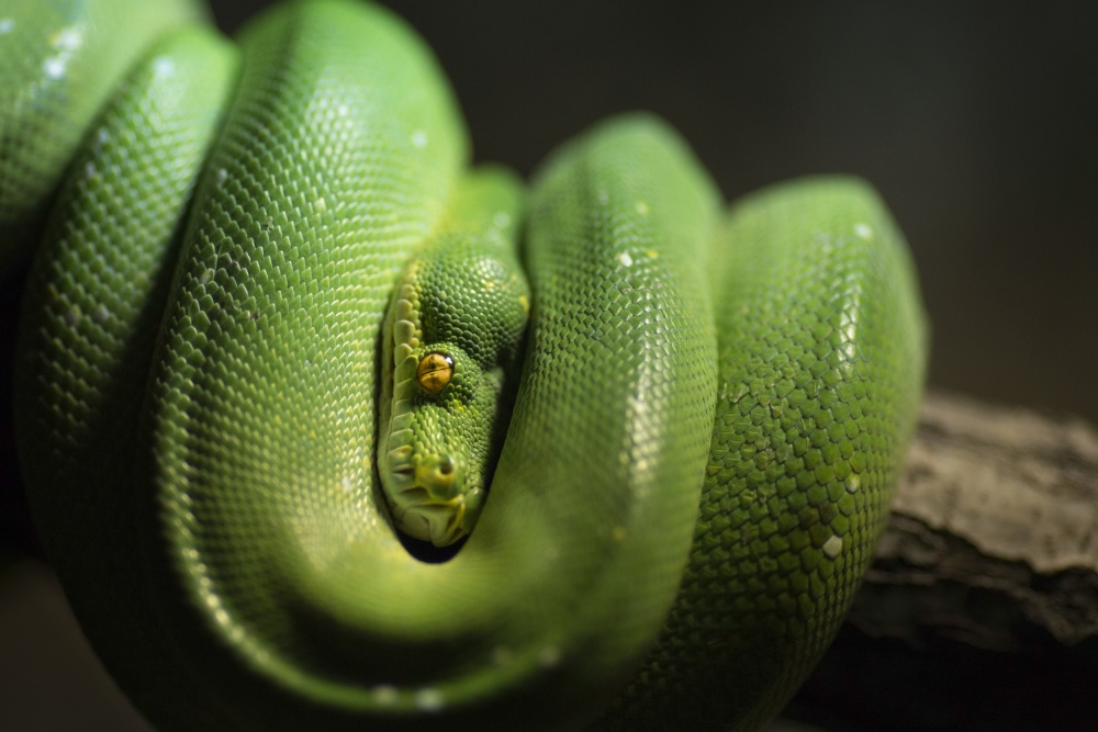 A piece of fine art art photography titled The Green Danger by Marco Grill