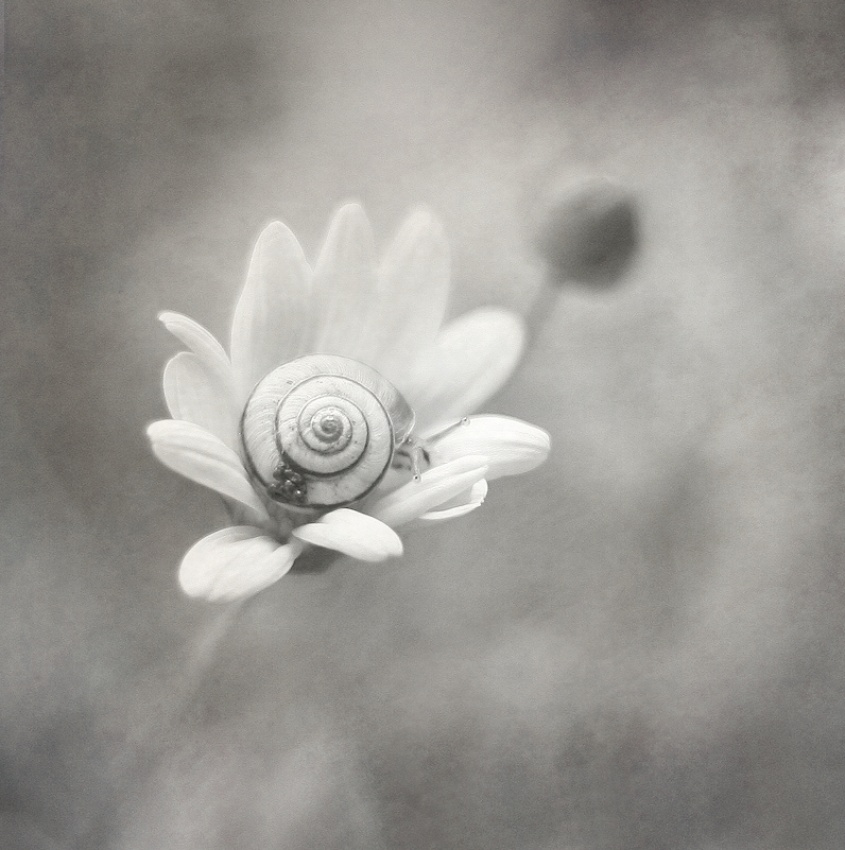 flower and snail