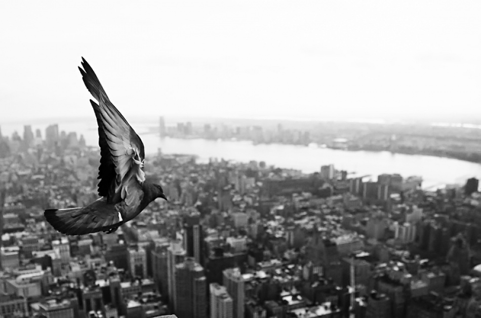 A piece of fine art art photography titled New York Freedom by Stripso