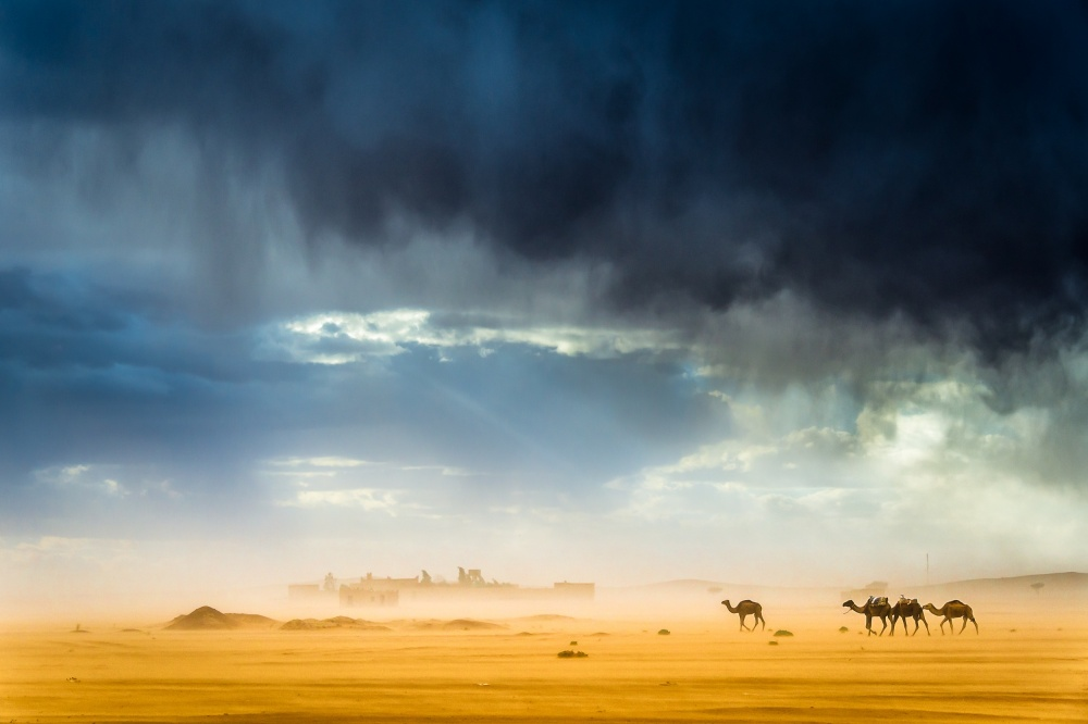 A piece of fine art art photography titled Storm, Wind, Rain, Sand, Camels and Incredible Light In the Desert by Tristan Shu