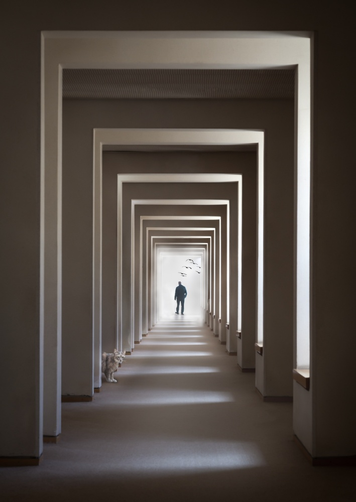 A piece of fine art art photography titled The Cat Who Walks Through Walls by Tomer Eliash