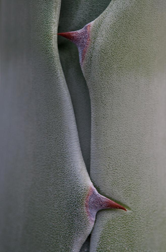 A piece of fine art art photography titled Senso by El Filósofo