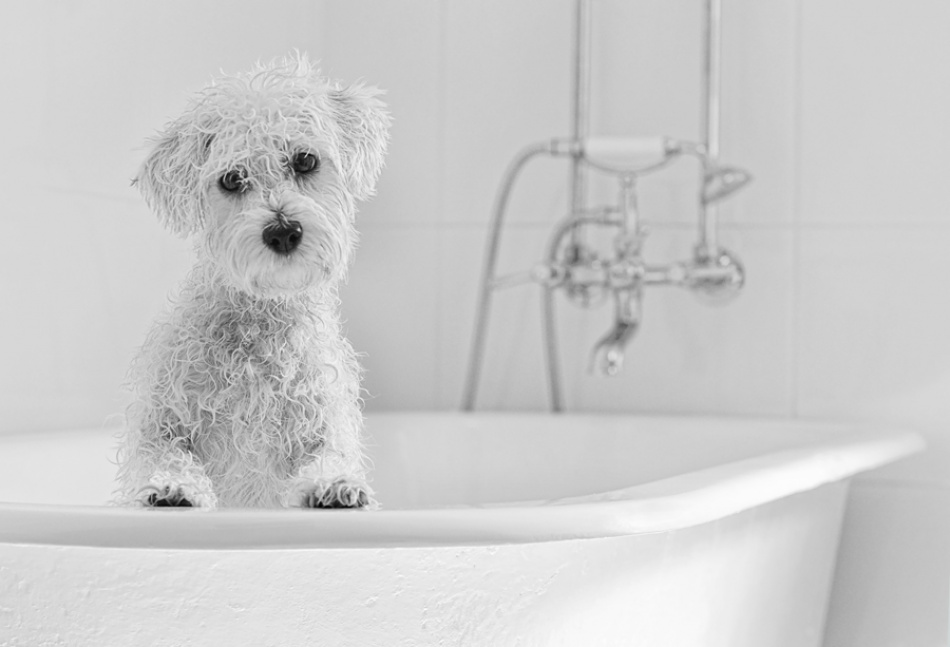 A piece of fine art art photography titled Bath Time by Nicole Goggins