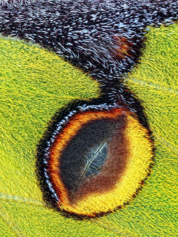 A piece of fine art art photography titled Eyespot by Jimmy Hoffman