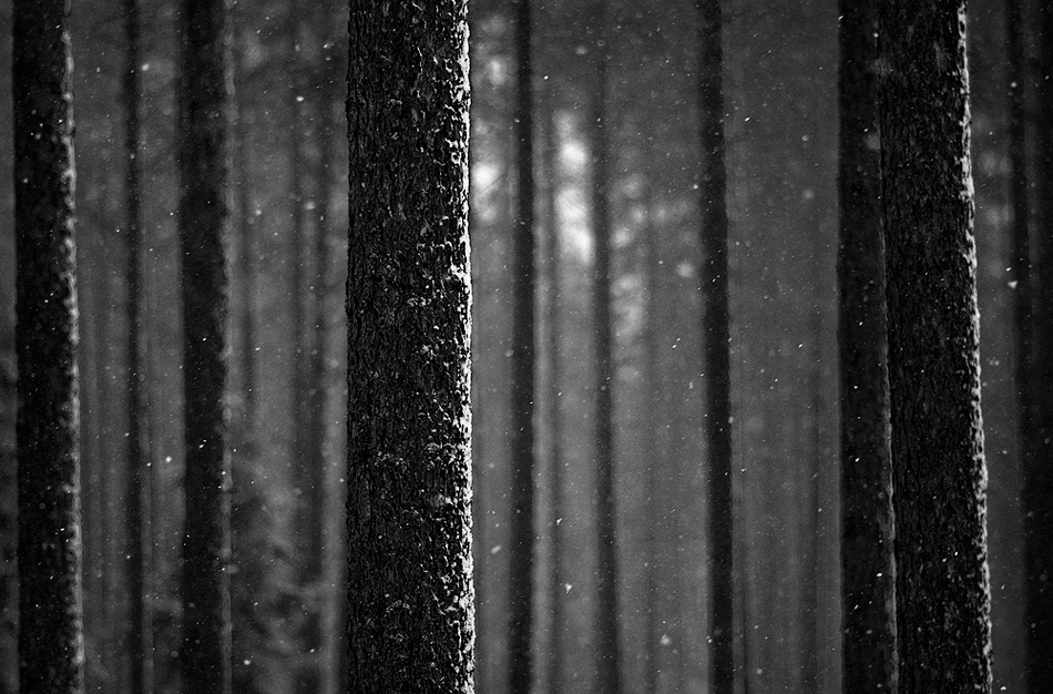 A piece of fine art art photography titled In the Snowing Forest by Joni Niemelä