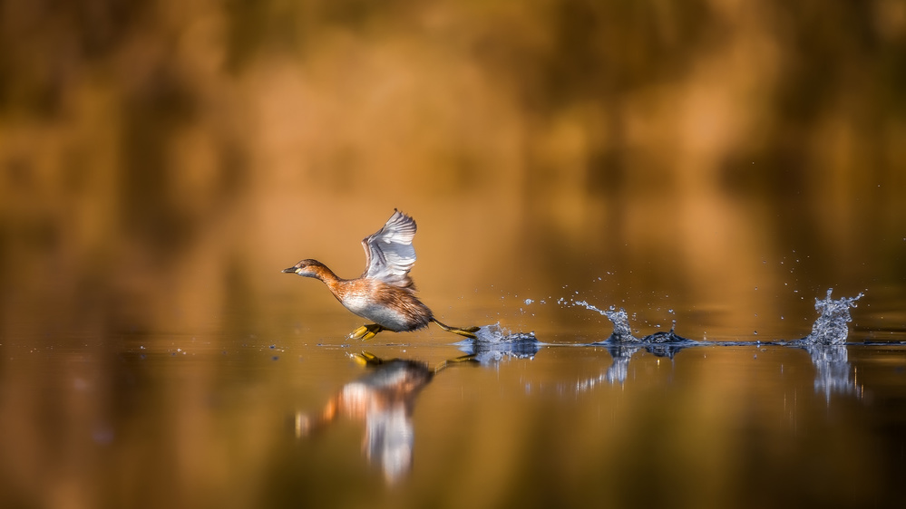 A piece of fine art art photography titled Running Over the Water by Faisal ALnomas