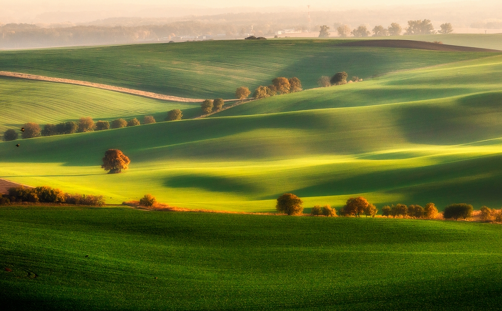 Green fields