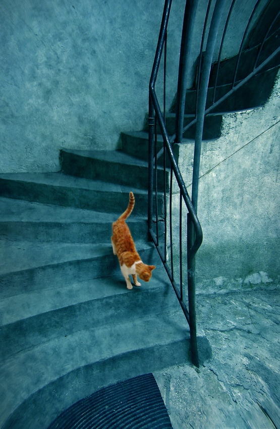 A piece of fine art art photography titled The Blue Daily Round of One Orange Cat by Dimitar Lazarov - Dim