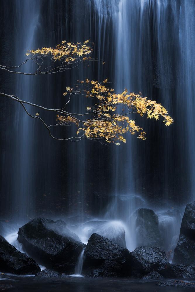 A piece of fine art art photography titled Yellow Autumn by Yuki Yatsushima