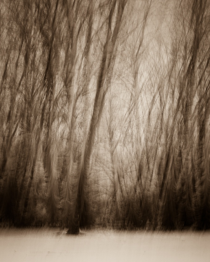 A piece of fine art art photography titled Forests Edge by Trevor Brown
