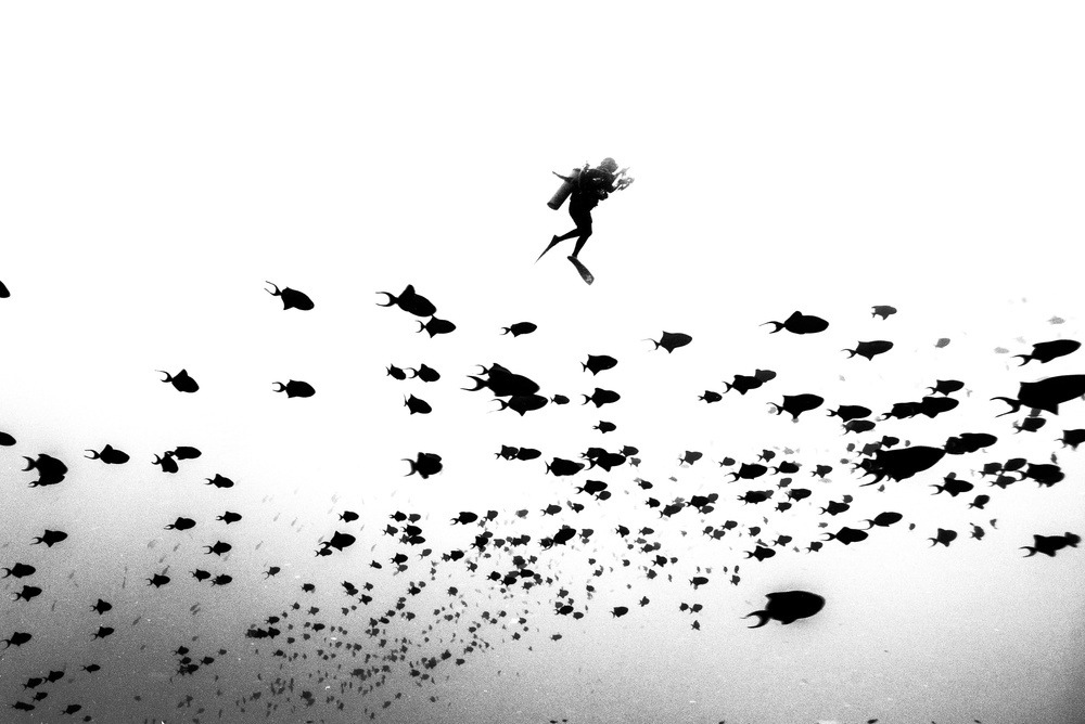 A piece of fine art art photography titled Pied Piper of Hamelin by charlie Jung