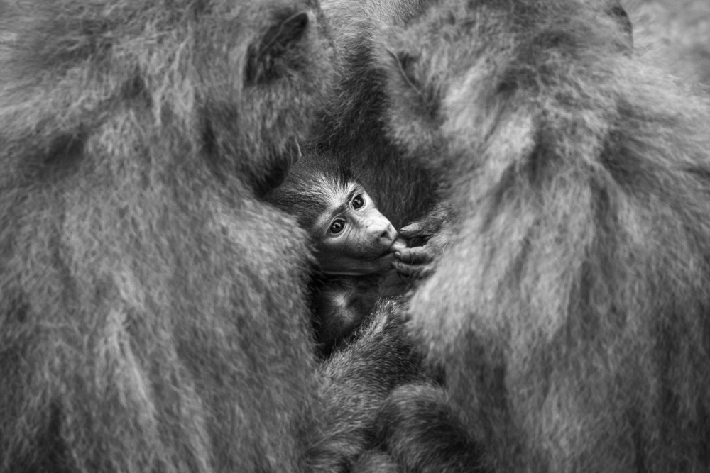 View this piece of fine art photography titled Wellcome baby by Ytje Veenstra