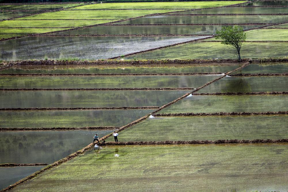 A piece of fine art art photography titled Fields and Two Mens by şirin aktürk