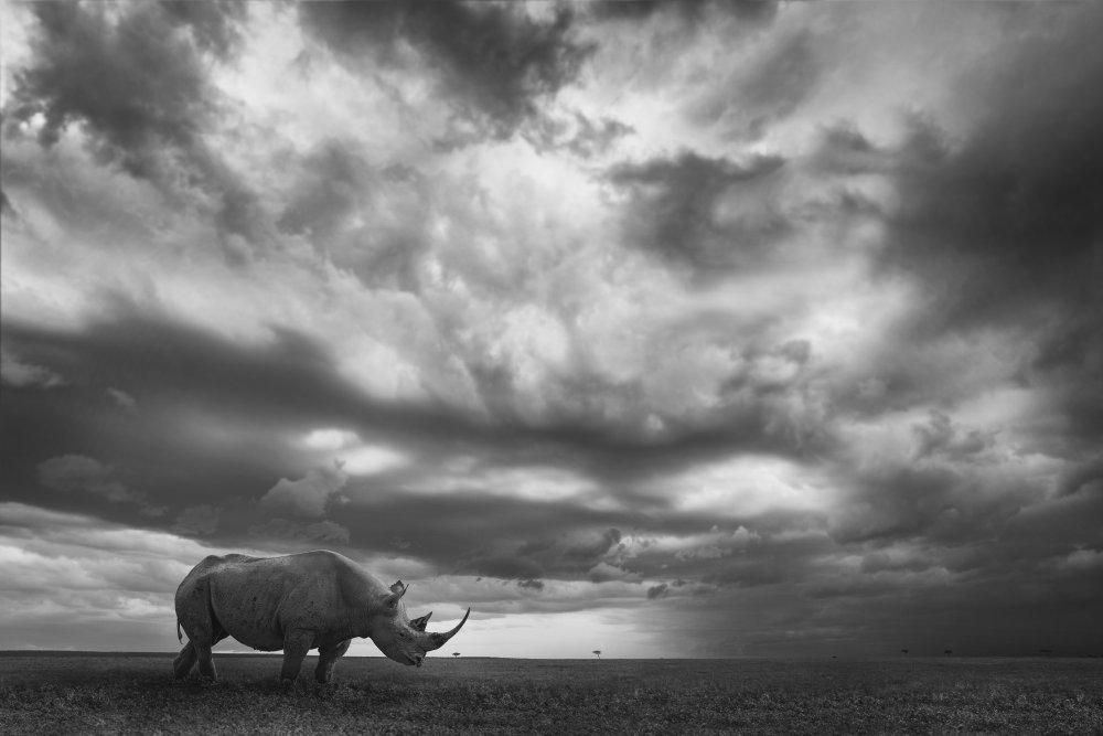 Rhino Land