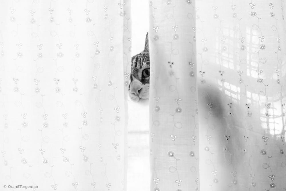 Cat peeking behind a curtain