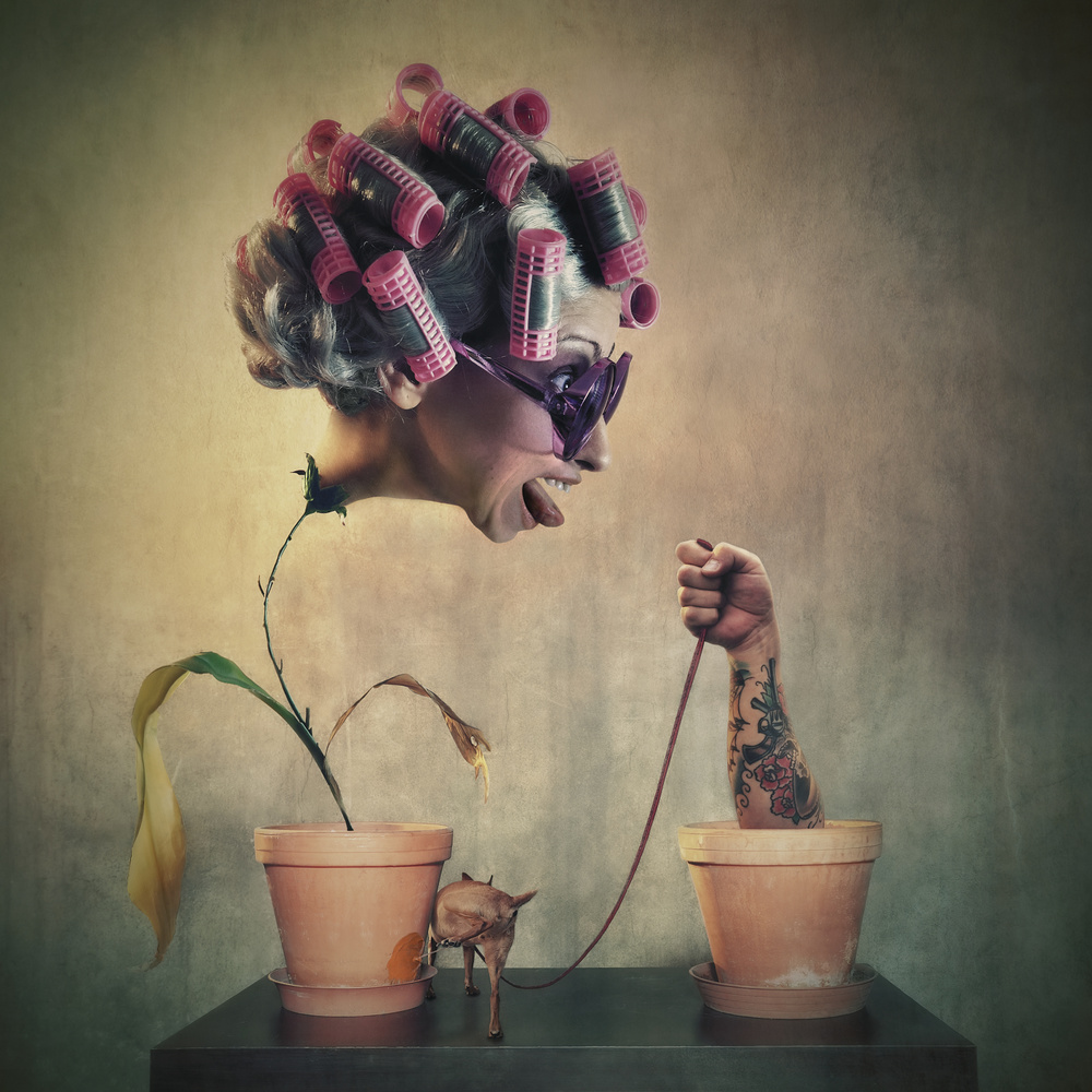 A piece of fine art art photography titled About Flower Pots and Dogs by Vaclav Kindl