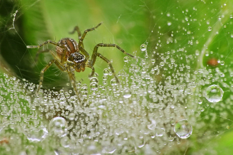 A piece of fine art art photography titled Crashing Dew by Brizadly Arifin