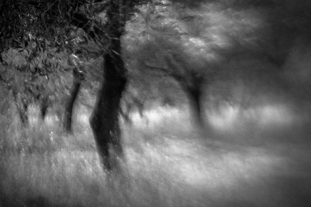 A piece of fine art art photography titled Within Olive Trees by Anne Rose Pretorius