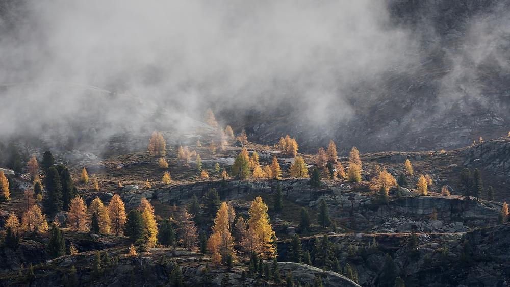 A piece of fine art art photography titled Autumn Light by Uschi Hermann