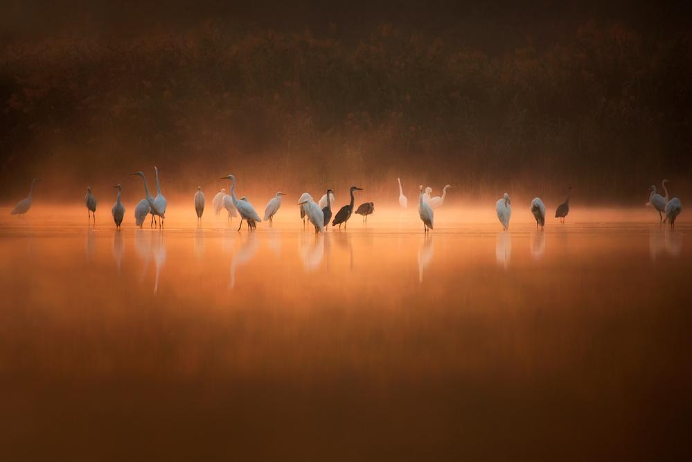 Birds in Sunrise...