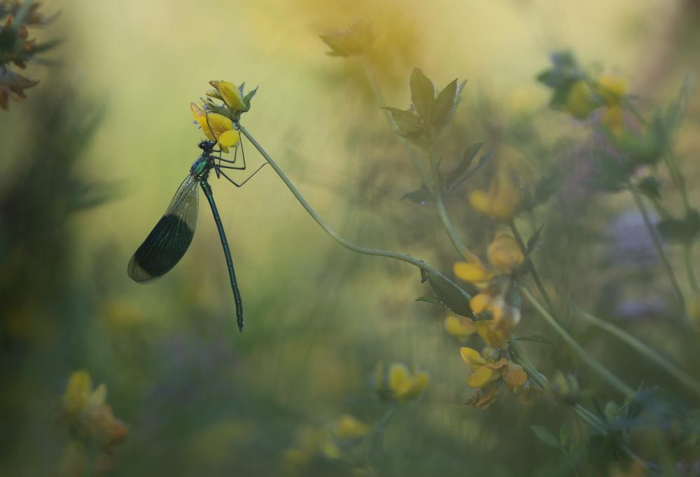A piece of fine art art photography titled Pure Enjoyment by Daan de Vos