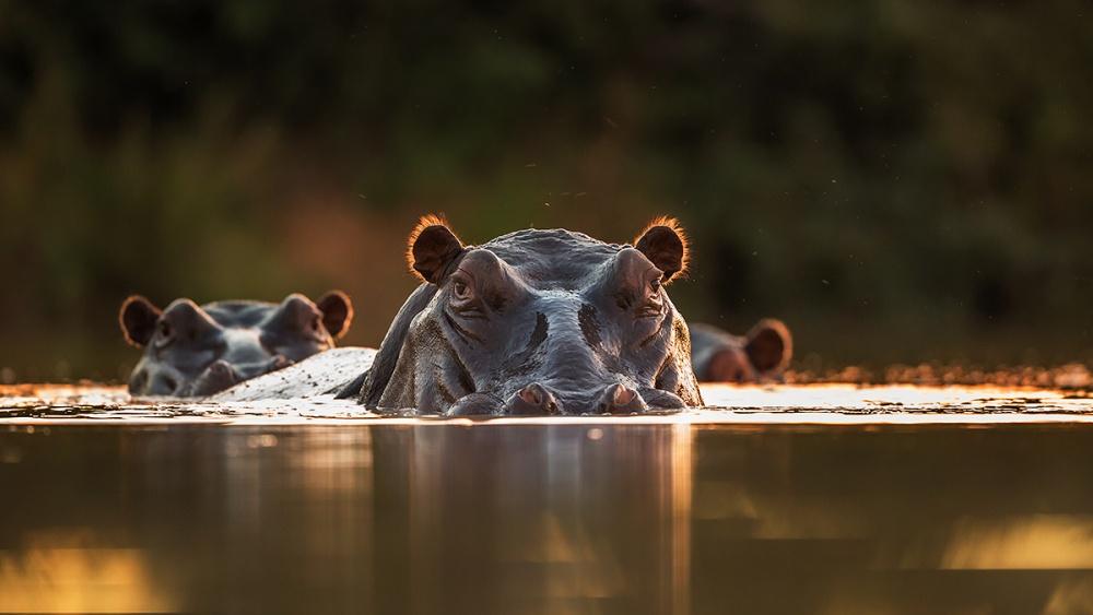 A piece of fine art art photography titled Sunset Pool by Hillebrand Breuker