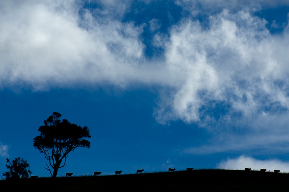 A piece of fine art art photography titled Sheep by Andrew Stewart