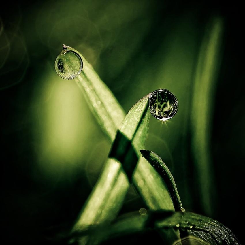 A piece of fine art art photography titled Green Dream by Cath Schneider