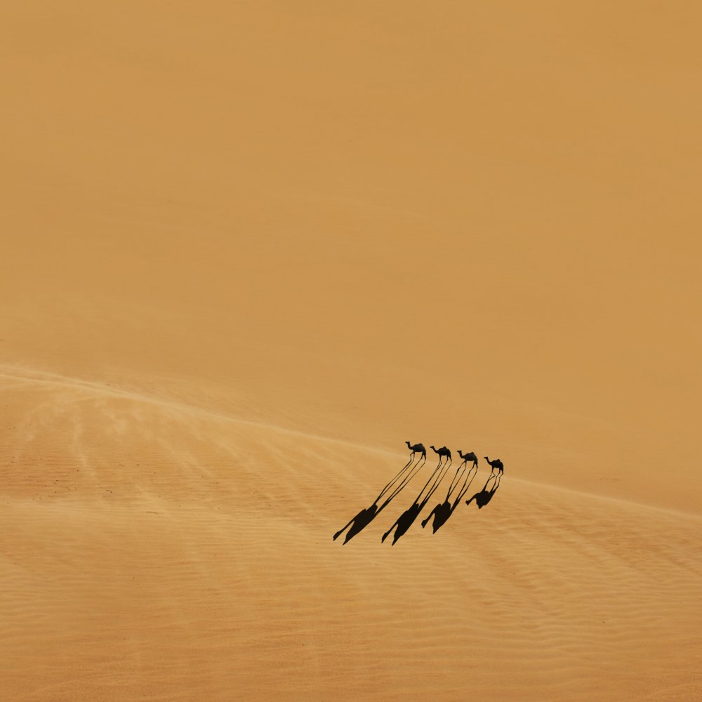 View this piece of fine art photography titled Camels by Radin Badrnia