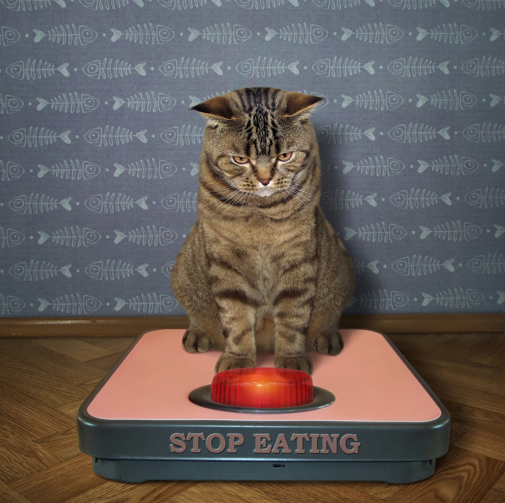 Stop eating!